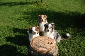 Interaktyvus žaislas šunims Pizza Spin